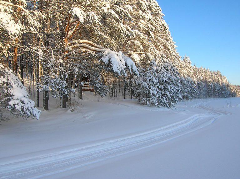 talvi19-1